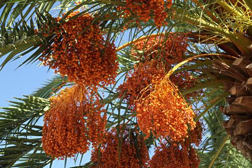 Palm trees near the Sea of Galilee
